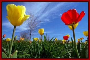 ¡¡Primavera!!